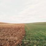 farmland-801817_1280